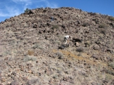 blm rock art 09